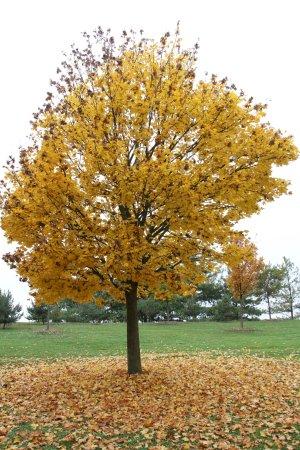 Le Parc De La Plage Bleue: arbre en automne