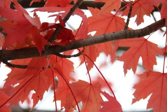 Le Parc De La Plage Bleue: feuilles d'automne