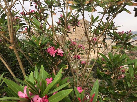 Château de Byblos : Byblos castle surroundings