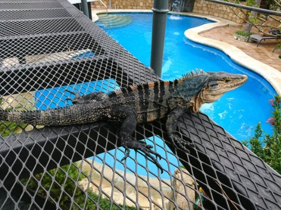 La Mansion Inn: Welcomed Pool guest