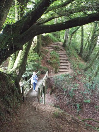 Lydford, UK: Upper path through woodland