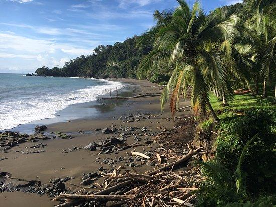 Casa Corcovado Jungle Lodge: Private beach