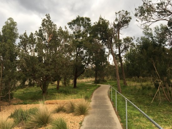 Casuarina Forest Reserve