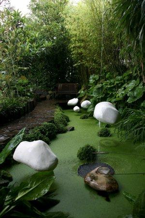 bassin aux lentilles + installation - Photo de Jardin Intérieur à ...