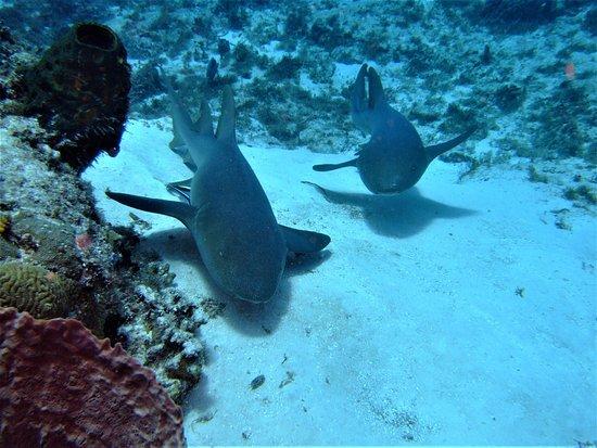 Pro Dive International: Nurse sharks @ Cozumel