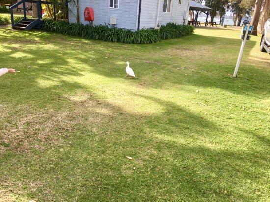 Mannering Park Resmi