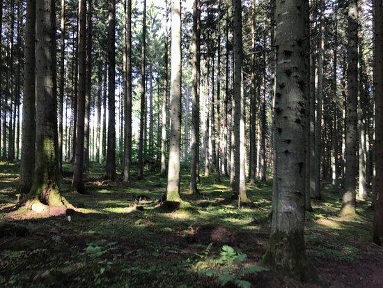 Odeshog, Sweden: photo0.jpg