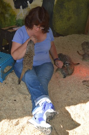 Stretham, UK: Getting on with the Meerkats (or them getting on us)