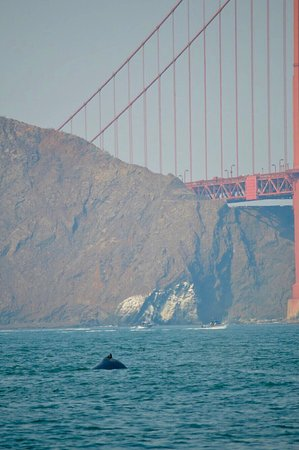 Farallon Islands Whale Watching Reviews