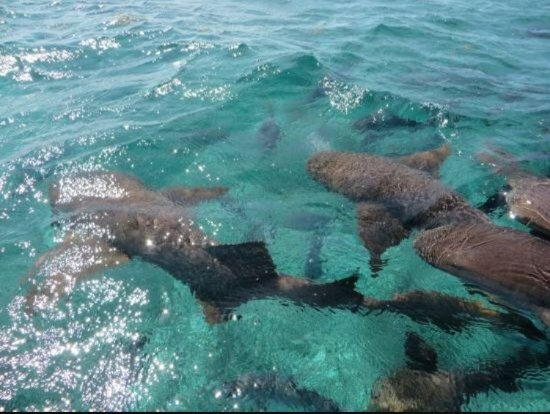 Royal Palm Island Resort: Shark and Ray Alley