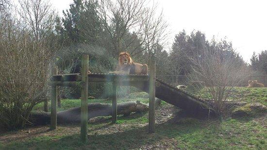 Burford, UK : Lion