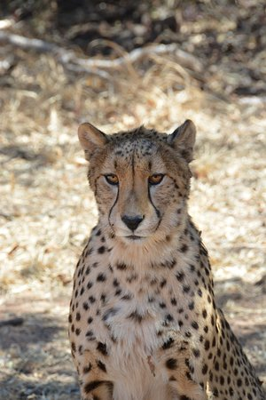 Ann van Dyk Cheetah Centre Photo