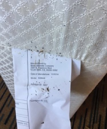 Marriott Marquis San Diego Marina: Bed bugs on Martess