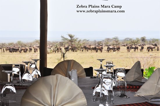 Zebra Plains Mara Camp: Dining with a view