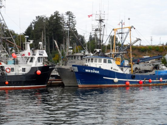 Gods Pocket Marine Provincial Park: Port Hardy Harbour