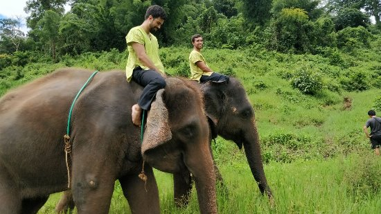Ran-Tong Save & Rescue Elephant Centre : IMG-20170904-WA0000_large.jpg