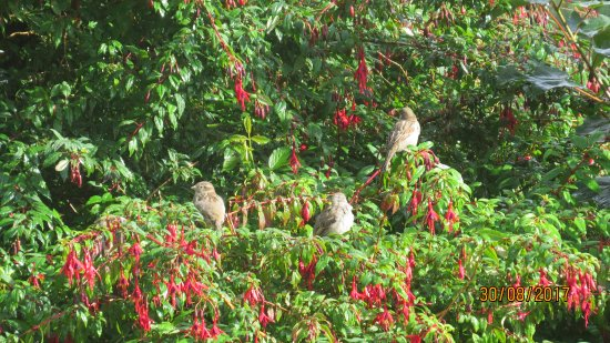 Ardlui Hotel: Cheerful, chirping Sparrows sound the wakeup call.