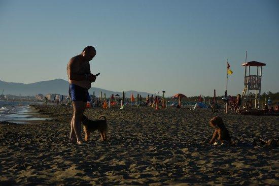 """Dog Beach : Siamo tutte """"pelosetti"""""""