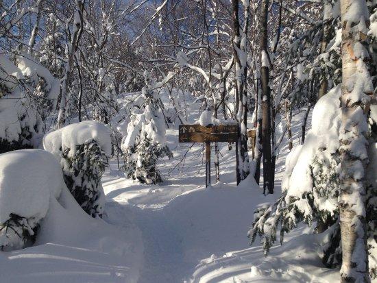 Parc National d'Aiguebelle: Sentier de raquettes qui mène à La Cigale