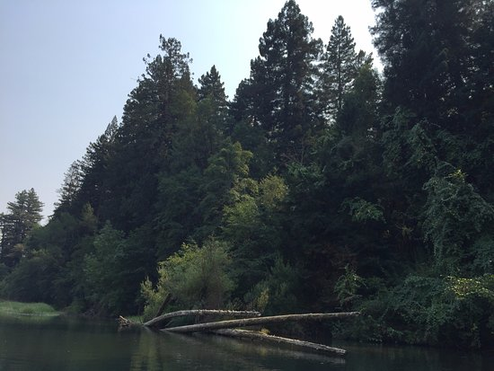 Russian River Adventures (SOAR Inflatables) : Beautiful green bank toward the end of the trip