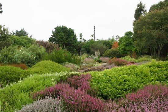 Mendocino Coast Botanical Gardens: Gardens