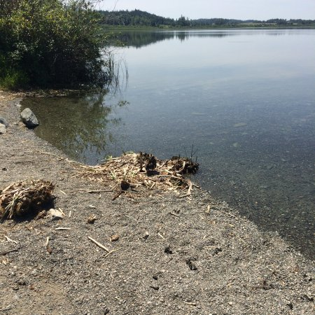 Quesnel, Canadá: Birds nesting on boat ramp