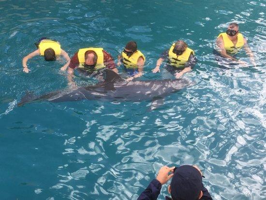 Dolphinaris Cozumel : photo7.jpg