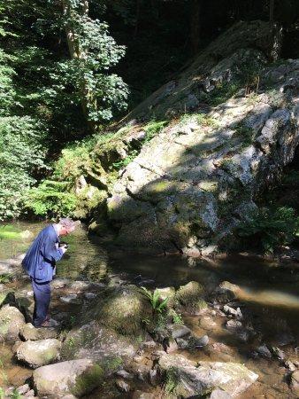Menai Bridge, UK: Plas Cadnant Hidden Gardens