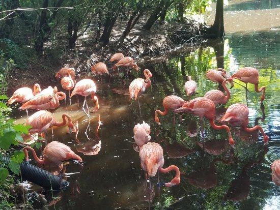 Jacksonville Zoo & Gardens: 20170901_161839_large.jpg