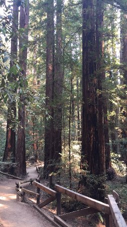 Armstrong Redwood State Reserve: photo1.jpg