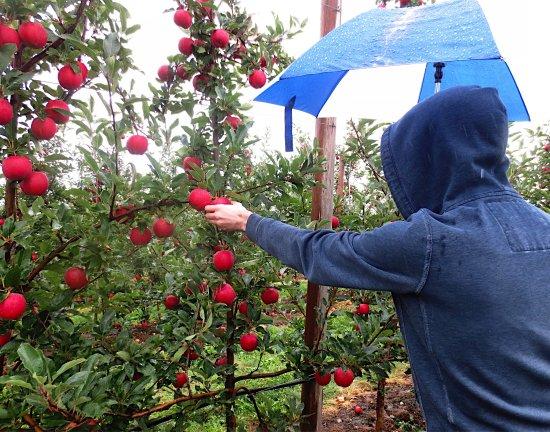 Shelburne Falls, MA: Apex Orchards