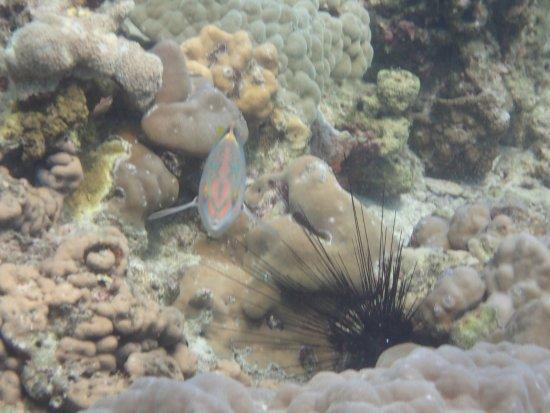 Rawai, Thailand: Andys Scuba Diving Phuket