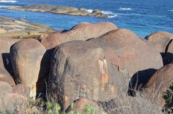 Denmark, Australia: Just like elephants..