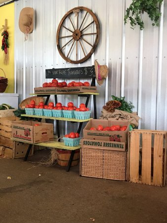 Belleview, FL: The worlds BEST tomatoes