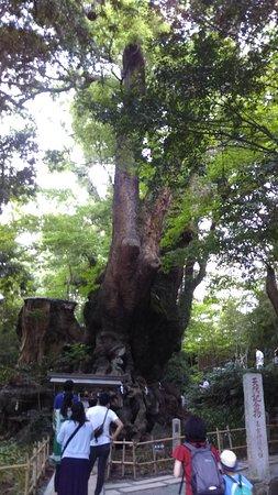 Kinomiya Shrine: DSC_0294_large.jpg