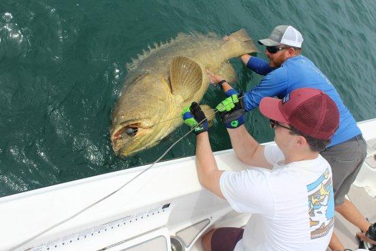 Boca Grande, FL: Goliath Grouper Fishing