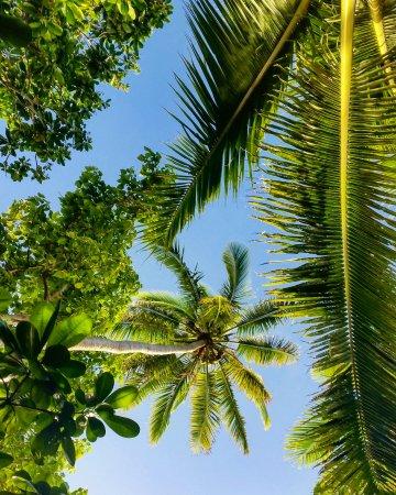 Uoleva Island, Tonga: IMG_20170724_092704_706_large.jpg
