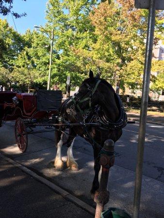Victoria Carriage Tours: photo0.jpg