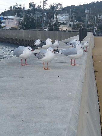 Seagull Promenade