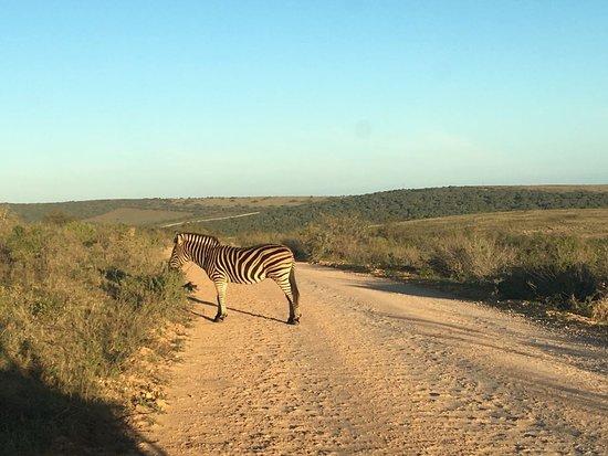 Colchester, Afrika Selatan: IMG-20170903-WA0010_large.jpg