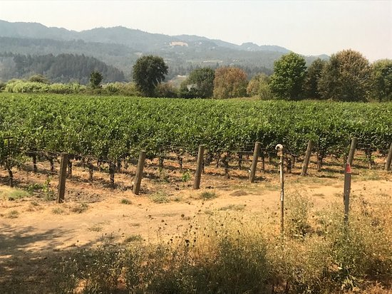 Napa Valley Wine Train : Picture from the wine train