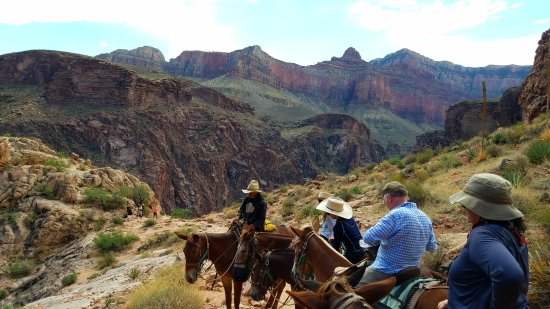 Grand Canyon Mule Tours by Xanterra : A water break with story time