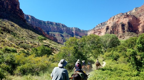 Grand Canyon Mule Tours by Xanterra : Heading back to the rim