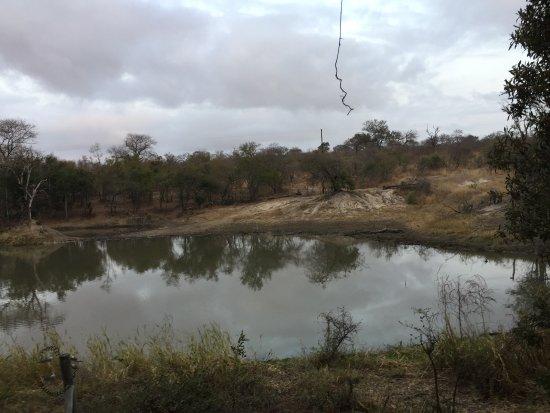 Cheetah Plains: photo2.jpg