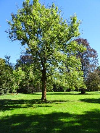 Abbaye de Val-Dieu : magnifique arbre du parc