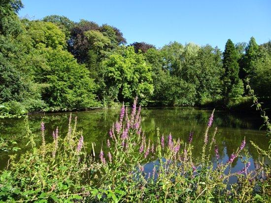 Abbaye de Val-Dieu : plan d'eau et arbres du parc