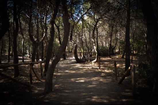 Parco Pineta Regina