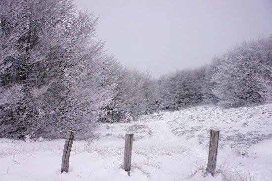 Parco Nazionale delle Foreste Casentinesi, Monte Falterona e Campigna: Monte Falco in veste invernale