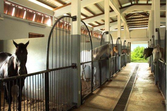 Billeder af Maritim Equestrian Centre – Billeder af Mauritius - Tripadvisor