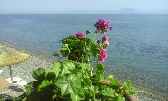 Kato Achaia, Greece: Η θέα από το χώρο εστιατορίου
